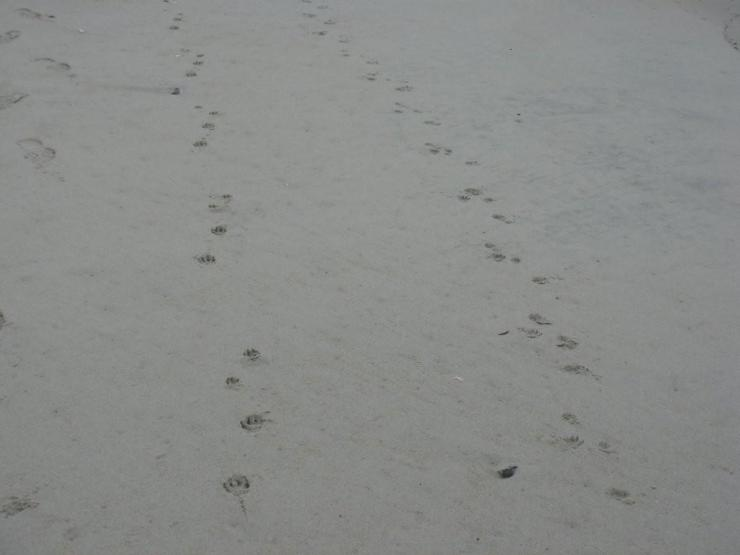 Girls …Paw Prints At The Beach